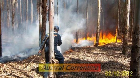 Más de 460 hectáreas afectadas por feroz incendio forestal
