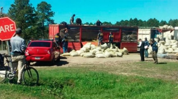 Secuestraron 10 toneladas de marihuana en una ruta entrerriana
