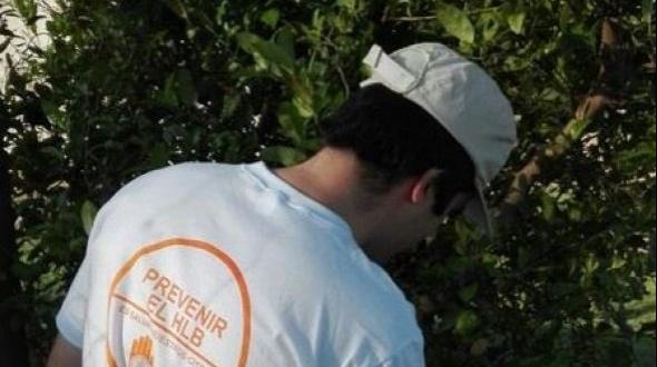 Detección de plantas positivas al HLB en el norte de Corrientes