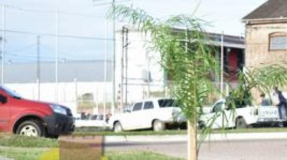 "Plantaron palmeras en la Plazoleta ""Malvinas Argentinas"""