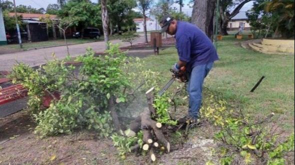 HLB: crearon un protocolo nacional de lucha y se modificó el status fitosanitario