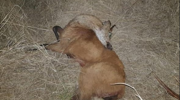 Liberaron a los policías furtivos que ejecutaron tres ciervos