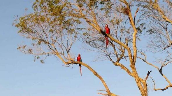 "Resultado de imagen para ""Reserva Natural Silvestre Cambyretá"","