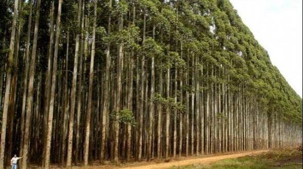 La provincia estará presente en Feria Forestal Argentina