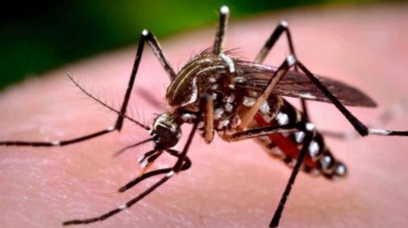Se detectaron 22 casos de dengue en lo que va del verano