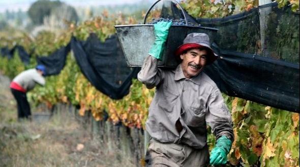 A los trabajadores rurales y empleadores: ¡Gracias!